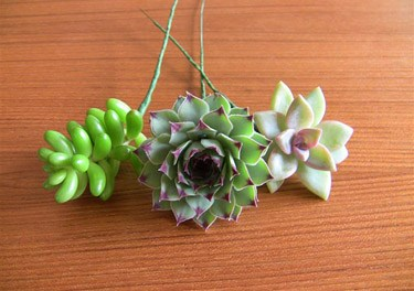 Do it yourself succulent bouquets