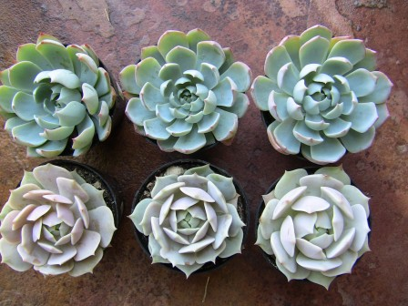 Succulent Plant Assortment 15