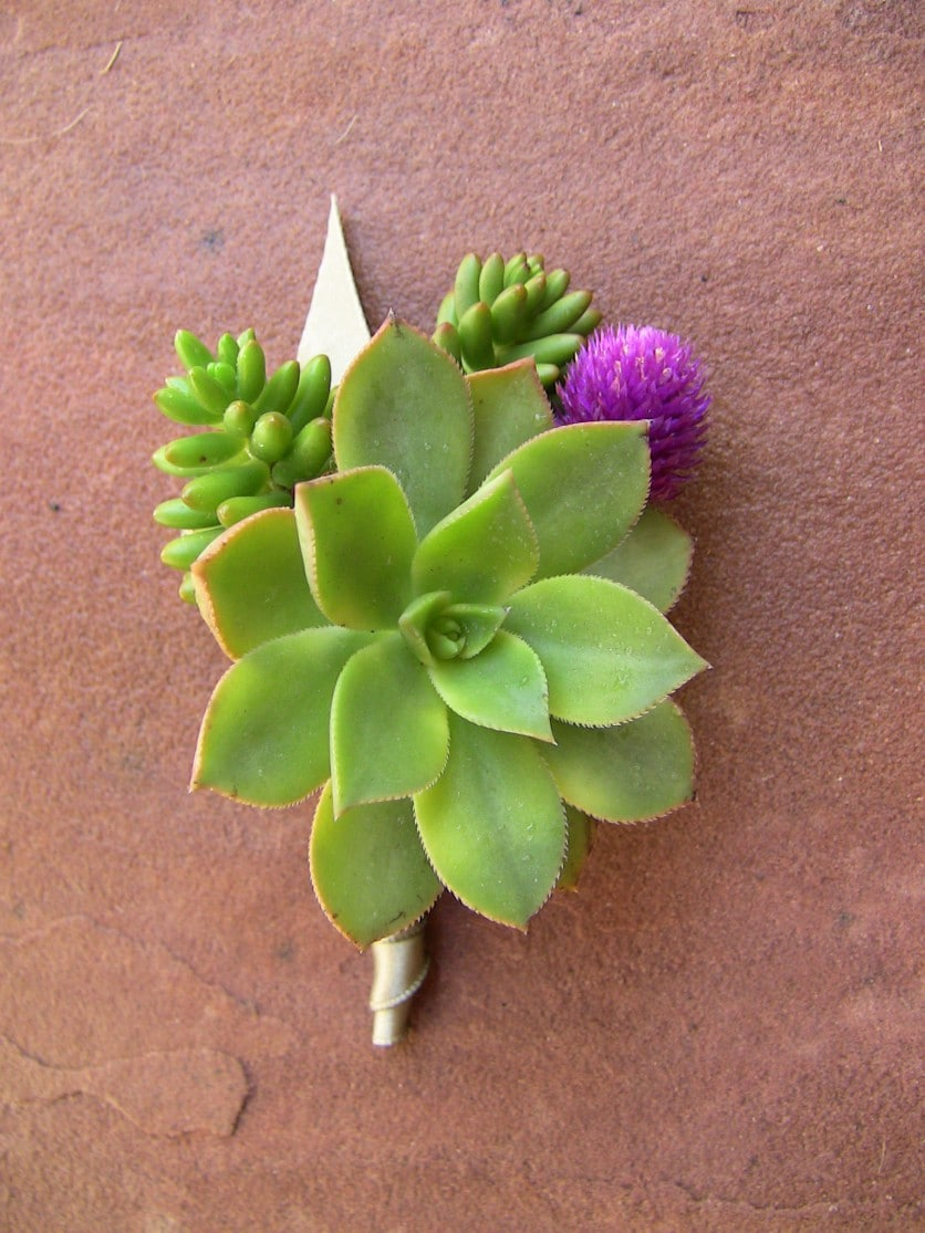 Succulent Boutonniere Amp Corsages Gallery Urban Succulents