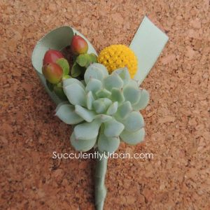 Succulent-boutonniere for wedding
