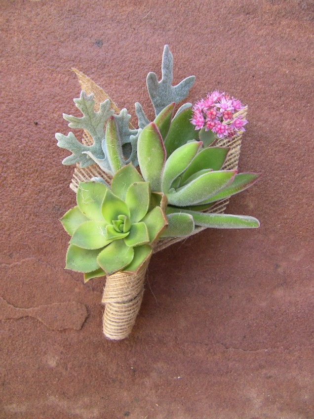 Succulent boutonniere with dusty miller leaf and pink accent.