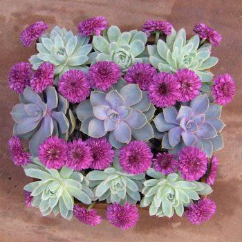 Wood box succulent arrangement-mums