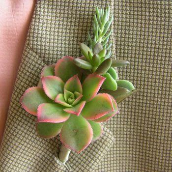 Succulent Boutonniere-Succulent Kiwi