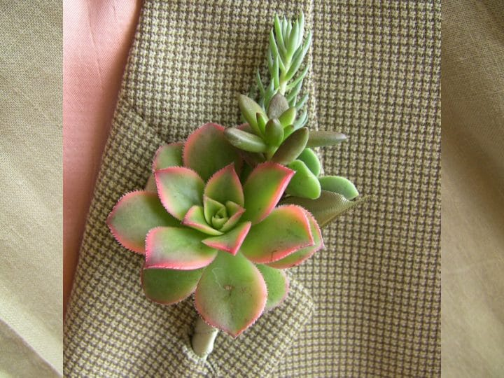 Succulent boutonniere with aeonium kiwi