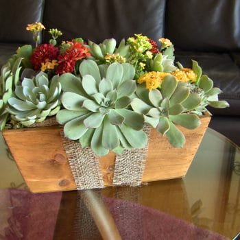 succulent-centerpiece-wooden-box-05
