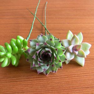 DIY Succulent Bouquets