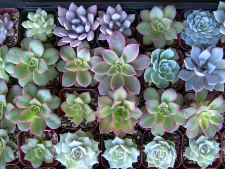 Collection of 50 small succulents for Jeanine