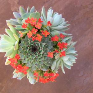 Succulent-bouquet_6553