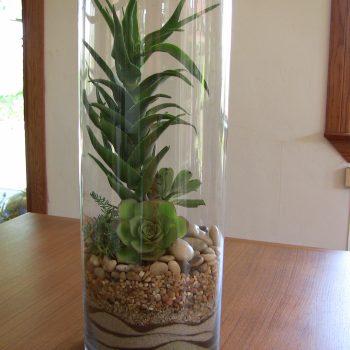 Succulent Terrarium Desert Trifle