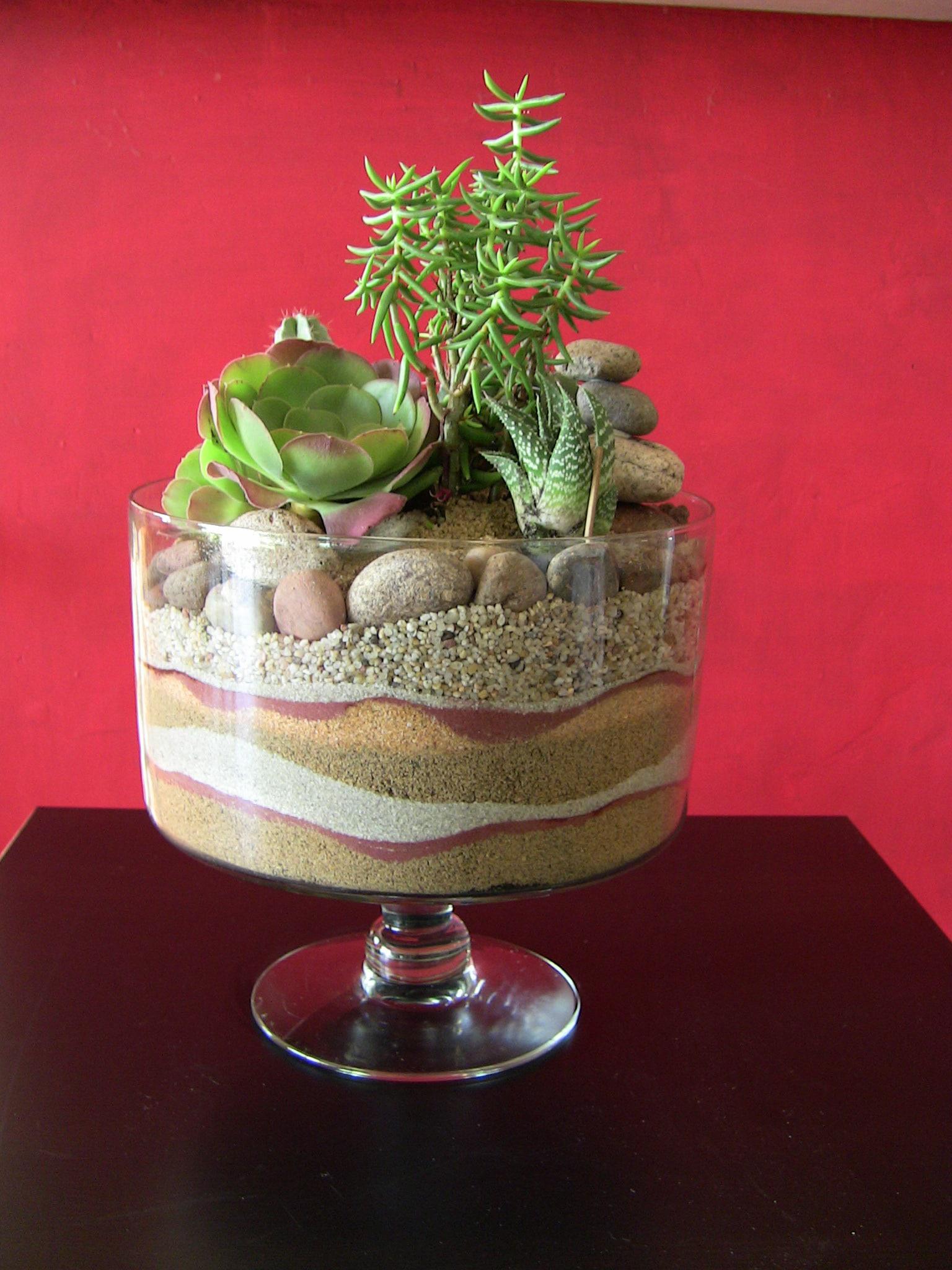 Succulent Terrarium Desert Trifle Urban Succulents