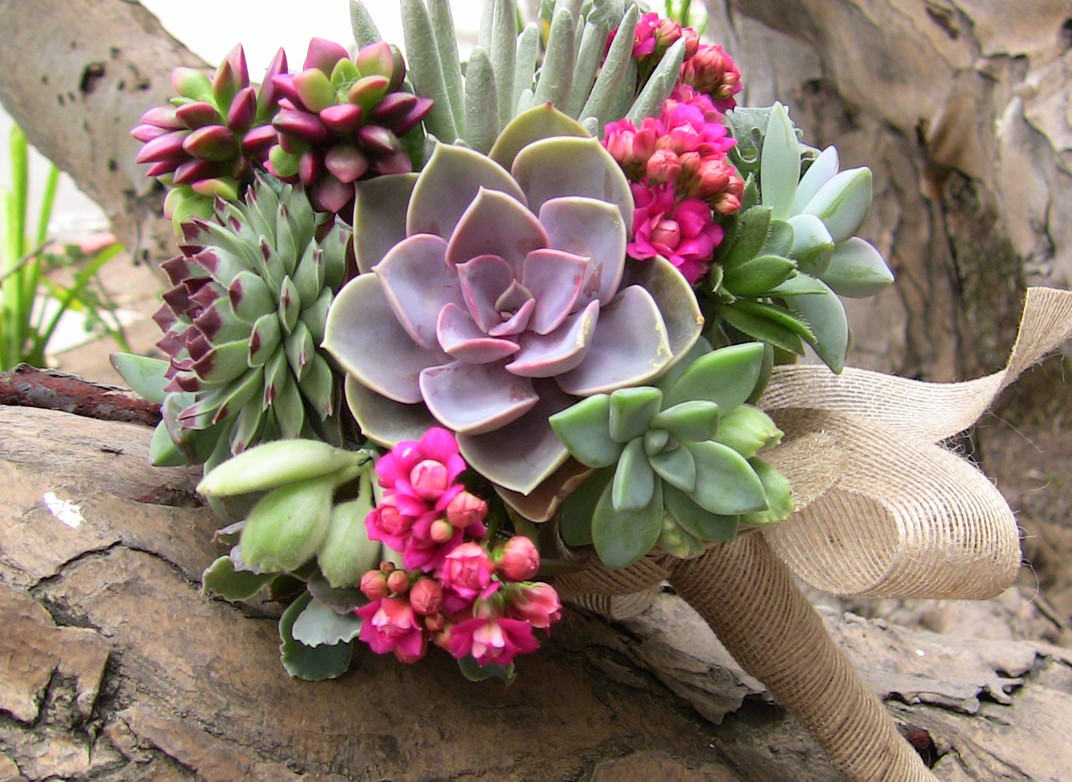 succulent plant floral designs wedding bouquets. Black Bedroom Furniture Sets. Home Design Ideas