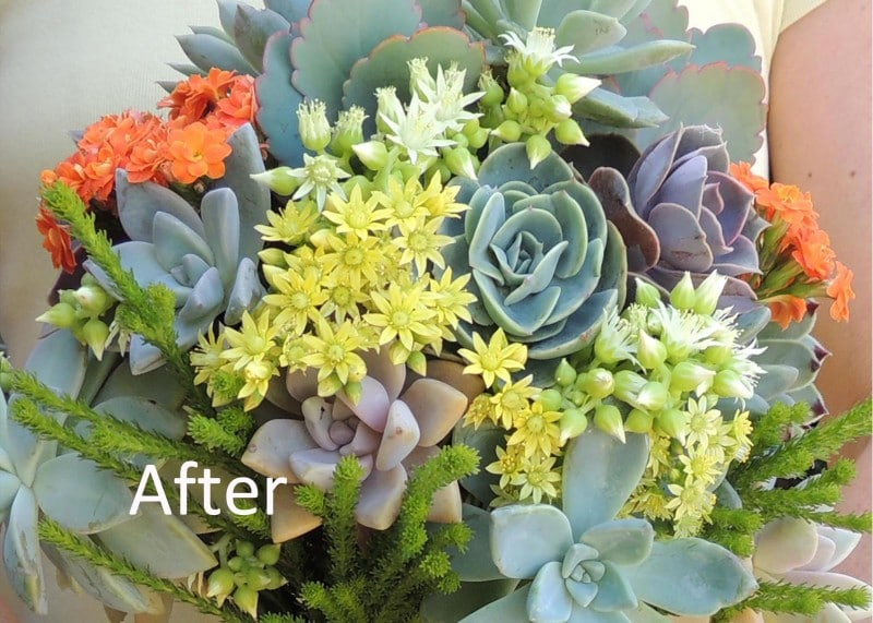 succulent-bouque_how-to_b copy