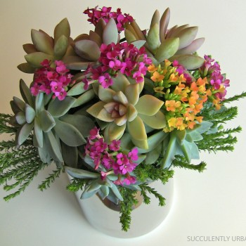 succulent-bouquet-in-Spring_colors