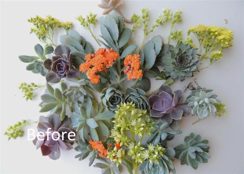 succulent-bouquet_how-to_d copy (Medium) (2)