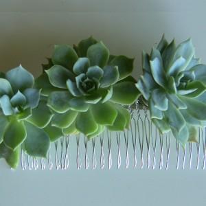 succulent-silver-comb