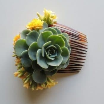 Single Succulent for Marquia