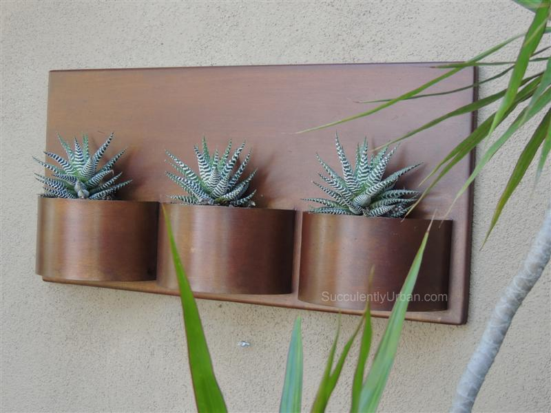 Metal Wall Planter metal wall planter-urban succulents