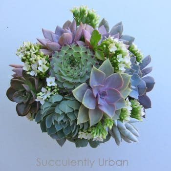 Hens-and chick_succulent-bouquet-2jpg