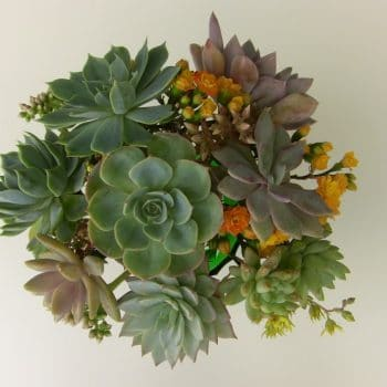 DIY Succulent Bouquet