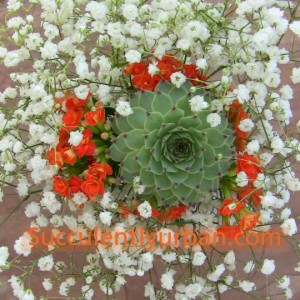 Single-succulent-bouquet_5608