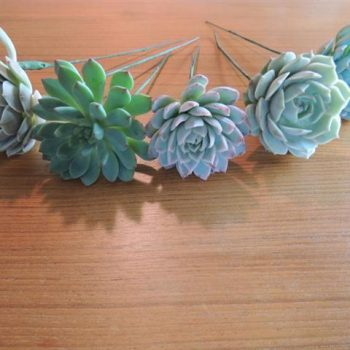 Collection of 5 wired succulents for Elizabeth