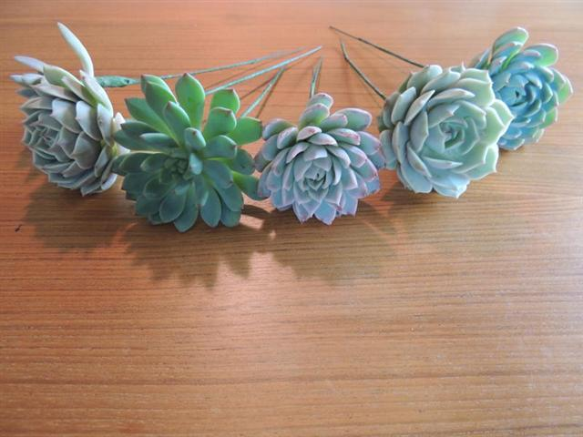 Succulents prepared with wire stems for use in boutonnieres.