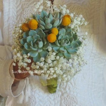 Succulent Bouquet with crespedias