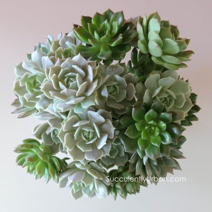 Diy Wedding Flowers Succulents : Wired succulents urban