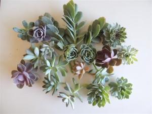 succulent-basket_03 (Medium)