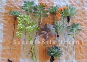 succulent-basket_11 (Medium) copy