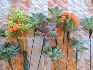 succulent-basket_16 copy (Medium)