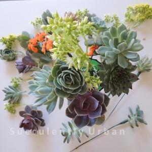 succulent-basket_19 copy