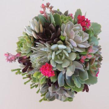 succulent-bouque_382