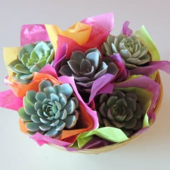 Succulent Gift Basket Small