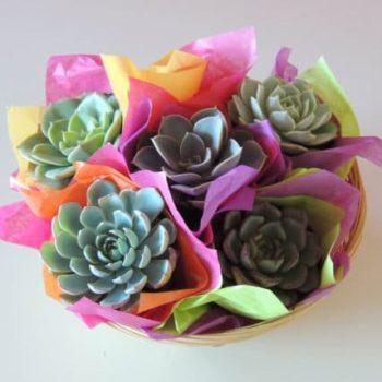 Succulent Gift Basket (S)
