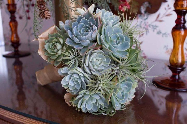 Green succulents and tilandsias