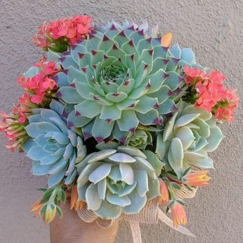 "Succulent Bouquet ""Micholete"""