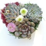heart dish with succulents