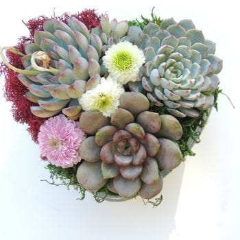 Heart-o-Succulents Gift