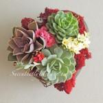 succulent-valentine_0171b2