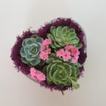 Heart shape dish with succulents for valentine-mothers-day gift.