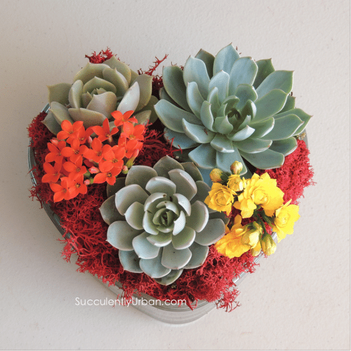 Heart O Succulents Gift Includes Shipping Urban Succulents