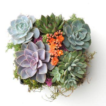 Succulents in Ceramic Container - Dani