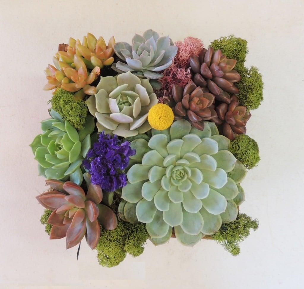 Marvellous Succulent Arrangements Images Best Idea Home