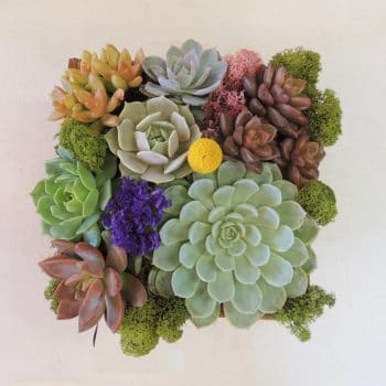Green Succulent Arrangement in Wood Container