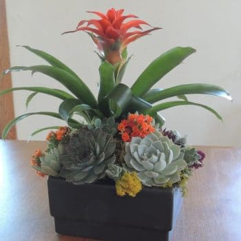 succulent-arrangement_3407