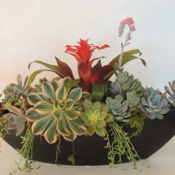 Succulent Arrangement-Oblong San Diego Delivery/Pick Up Only.
