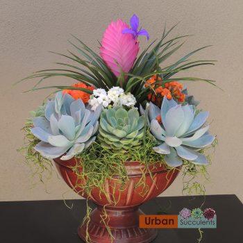 succulent-bromeliad-arrangement-4980-b