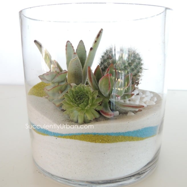 Succulent Terrarium White Sand In Cylinder San Diego