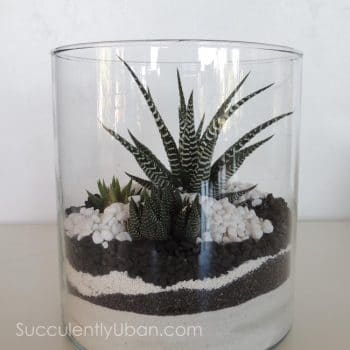 Cylinder Succulent Terrarium-(San Diego delivery only)